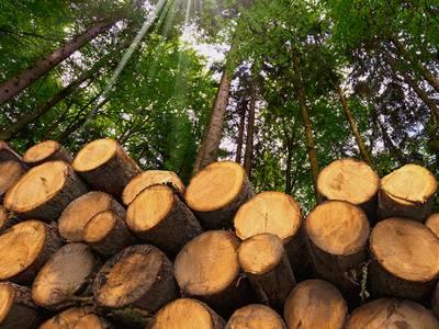 как получить лес на строительство дома